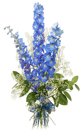 Baby Sbreath Flowers on Three Delphiniums   Flowerweb Sk