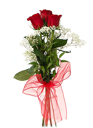 kytica troch ruž237 flowerwebsk
