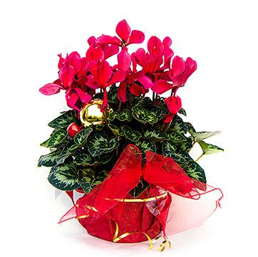 Hornbach - rozkvitnuté Vianoce  (http://www.modnetrendy.sk)